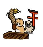 行事使い分けスタンプ(柴&パグ)(個別スタンプ:03)