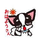 関西弁チワワンスタンプ(個別スタンプ:01)
