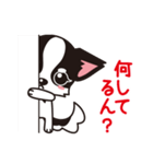 関西弁チワワンスタンプ(個別スタンプ:30)