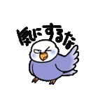 """""""セキセイインコの日常2"""" 鳥さんと一緒05(個別スタンプ:17)"""