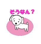 眉毛犬シロ(個別スタンプ:05)