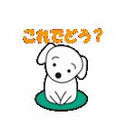 眉毛犬シロ(個別スタンプ:06)