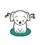 眉毛犬シロ(個別スタンプ:15)