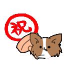 誕生日祝い 黒い犬ピッピとパピヨンぱぴ子(個別スタンプ:17)