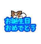 誕生日祝い 黒い犬ピッピとパピヨンぱぴ子(個別スタンプ:19)