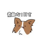 誕生日祝い 黒い犬ピッピとパピヨンぱぴ子(個別スタンプ:26)
