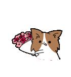 誕生日祝い 黒い犬ピッピとパピヨンぱぴ子(個別スタンプ:28)