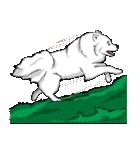 Pocket K-9: 雪の犬(個別スタンプ:37)