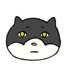 ブサ猫シリーズ ロマとマロ 顔芸ギャグ編(個別スタンプ:17)