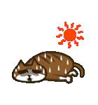 ハワイのSERIの愛猫ViViスペシャル①(個別スタンプ:20)