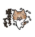 連絡にゃんこ(個別スタンプ:03)