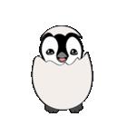 Chubby Penguins(個別スタンプ:01)