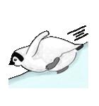 Chubby Penguins(個別スタンプ:14)