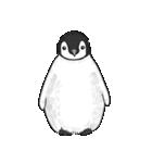 Chubby Penguins(個別スタンプ:32)