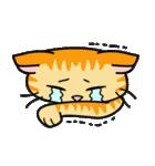 猫ねこコネコ(個別スタンプ:11)
