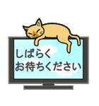 猫ねこコネコ(個別スタンプ:29)