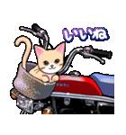 かわいいネコと原付スクーター(個別スタンプ:01)