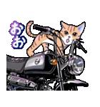 かわいいネコと原付スクーター(個別スタンプ:03)