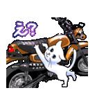 かわいいネコと原付スクーター(個別スタンプ:34)