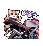 かわいいネコと原付スクーター(個別スタンプ:39)