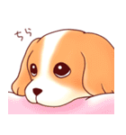 いぬだらけ。小型犬-その1-(個別スタンプ:1)