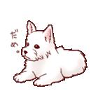 いぬだらけ。小型犬-その1-