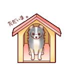 いぬだらけ。小型犬-その1-(個別スタンプ:13)