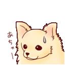 いぬだらけ。小型犬-その1-(個別スタンプ:16)