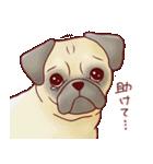 いぬだらけ。小型犬-その1-(個別スタンプ:18)
