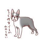 いぬだらけ。小型犬-その1-(個別スタンプ:31)