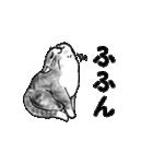 すきみゃさんスタンプ(個別スタンプ:12)