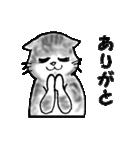 すきみゃさんスタンプ(個別スタンプ:37)