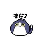 ぷにっとねこ ハチワレ君(個別スタンプ:27)