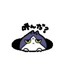 ぷにっとねこ ハチワレ君(個別スタンプ:38)