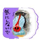 びびり動物(個別スタンプ:16)
