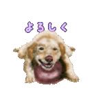 Re:Start 元保護犬スタンプ(個別スタンプ:1)
