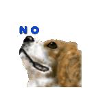 Re:Start 元保護犬スタンプ(個別スタンプ:3)