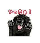 Re:Start 元保護犬スタンプ(個別スタンプ:4)