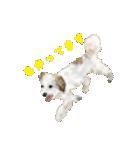 Re:Start 元保護犬スタンプ(個別スタンプ:6)