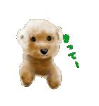 Re:Start 元保護犬スタンプ(個別スタンプ:8)