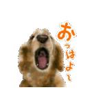 Re:Start 元保護犬スタンプ(個別スタンプ:9)