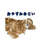 Re:Start 元保護犬スタンプ(個別スタンプ:10)