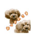 Re:Start 元保護犬スタンプ(個別スタンプ:11)