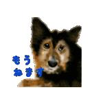 Re:Start 元保護犬スタンプ(個別スタンプ:12)