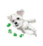 Re:Start 元保護犬スタンプ(個別スタンプ:13)