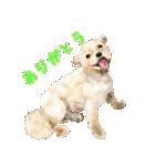 Re:Start 元保護犬スタンプ(個別スタンプ:14)