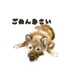 Re:Start 元保護犬スタンプ(個別スタンプ:15)