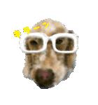 Re:Start 元保護犬スタンプ(個別スタンプ:19)