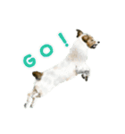 Re:Start 元保護犬スタンプ(個別スタンプ:20)