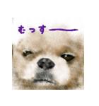 Re:Start 元保護犬スタンプ(個別スタンプ:21)